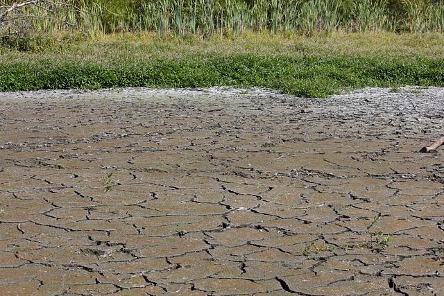 Drought 2015 Jericho Park