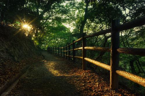 park trees sunset sun nature japan forest landscape evening amazing woods kyoto afternoon natural path dirt sunburst nara 奈良 奈良公園 夜 森林 日没 wakakusayama 奈良市 若草山 wakakusa 三笠山