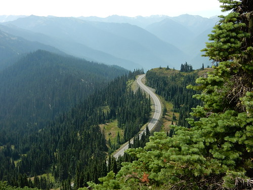 Road in Olympic National Park | by pacoalfonso