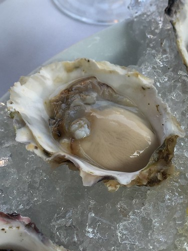 Oyster   by Josephine2004