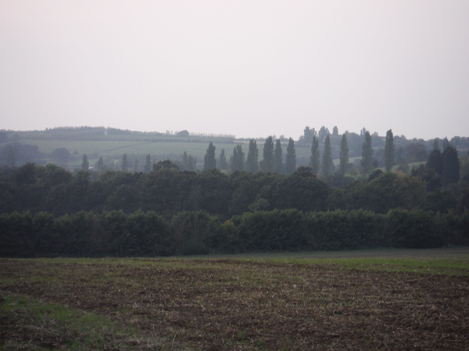 View from Field near Cold Norton SWC Walk 159 South Woodham Ferrers to North Fambridge