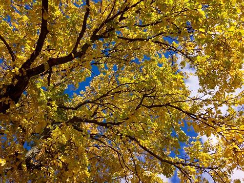 leaves boston massachusetts newengland foliage