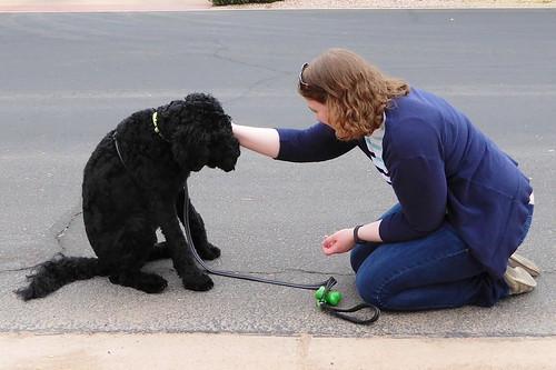 Puppy training | by yooperann