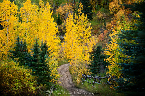 road autumn fall colorado fallcolors country lakecreek