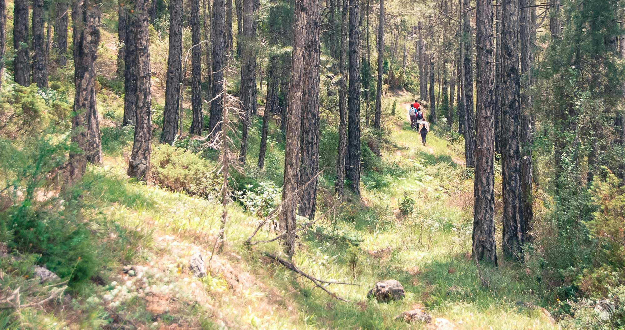 Entramos por el bosque hacia Poyo Alto