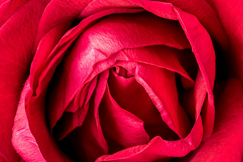 Heart of a rose | by Richard Bremer