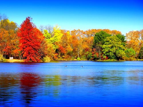 newyork brooklyn dmitriyfomenko image fall autumn sky foliage reflection prospectpark wow