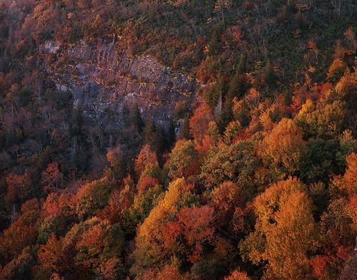 whitesidemountain devilscourthouse nantahalanationalforest sunrise trees fallcolor color largeformat film fujifilm provia rdpiii e6 arcaswiss fline 4x5 caltariin156135mm epsonv700 affinityphoto