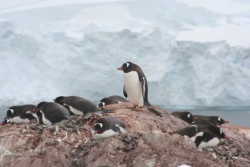 Antarctica 2006 (21)   by Laloe.be