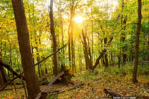 autumn trees light sunset sun fall yellow forest gold golden evening washington woods october foliage kevinpalmer tamron1750mmf28 pentaxk5 farmdalerecreationarea