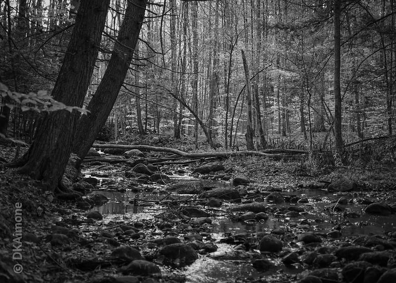 Woods, Creek