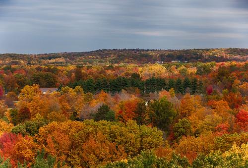 autumn trees ohio tower fall gardens arboretum sanctuary holden emergent cultivated holdenarboretum arboreta cultivatedgardens