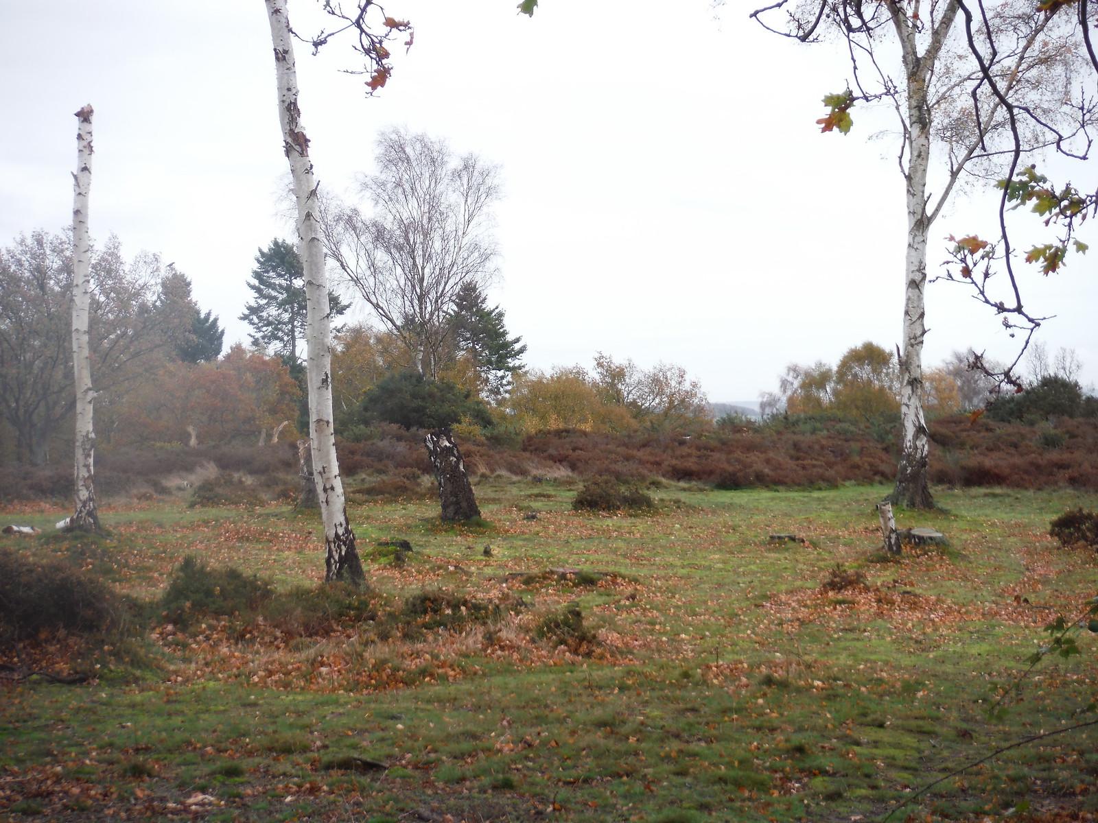Cooper's Hill Nature Reserve (I) SWC Walk 232 Lidlington to Flitwick