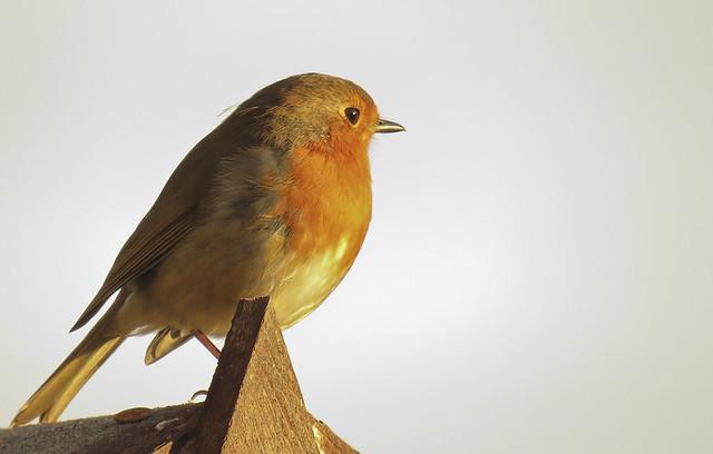 Robin - 214 of 215