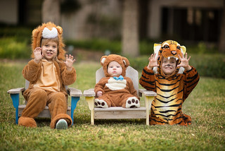Lions, Tigers, and Bears | by donnierayjones