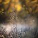 October morning by Tammy Schild