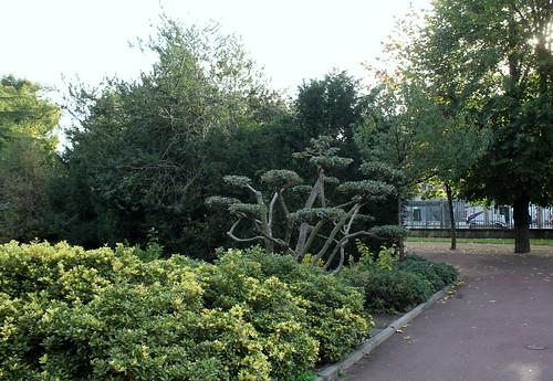Niwaki, la taille en nuage, l'art topiaire, dans le jardin de Michel 21952114030_13760fdf1b