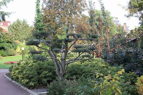 Niwaki, la taille en nuage, l'art topiaire, dans le jardin de Michel 22152629141_183971c11f