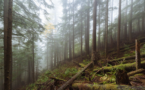 forest trees fog foggy nature tigermountain issaquah pacificnorthwest canoneos5dmarkiii samyang14mmf28ifedmcaspherical wideangle washington wallpaper background