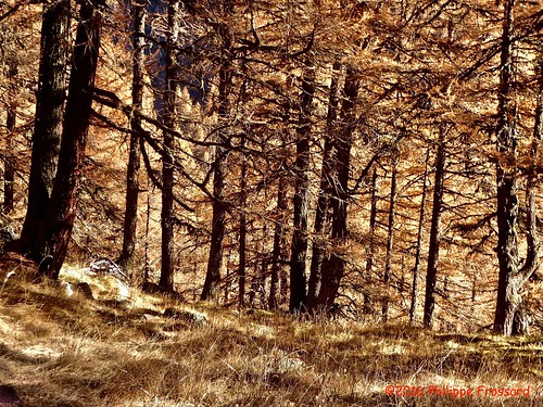 P1010427_LaGouille_Forêtautomnale | by philippefrossard