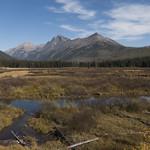 Rogers Meadow