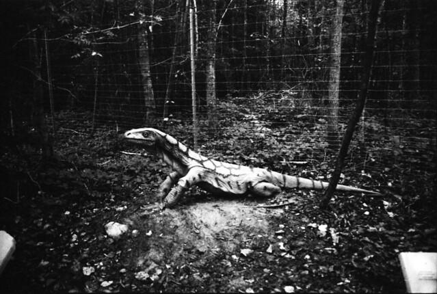 Dinopark Denkendorf 08102016_0012