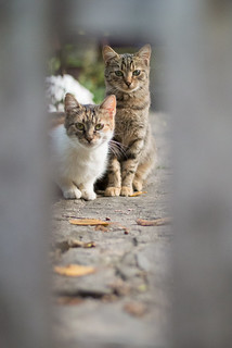 Two cats shot through a wooden fence | by Ivan Radic