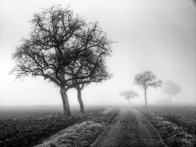A Misty Morning in the Rhine Meadows 02