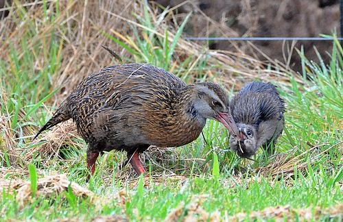 Weka | by flickr quickr