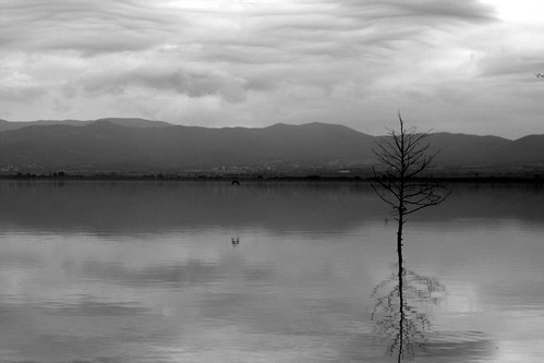cuckove canon dojran lake lakescape landscape panorama reflection macedonia nature tree emilchuchkov emilchuchkovphotography