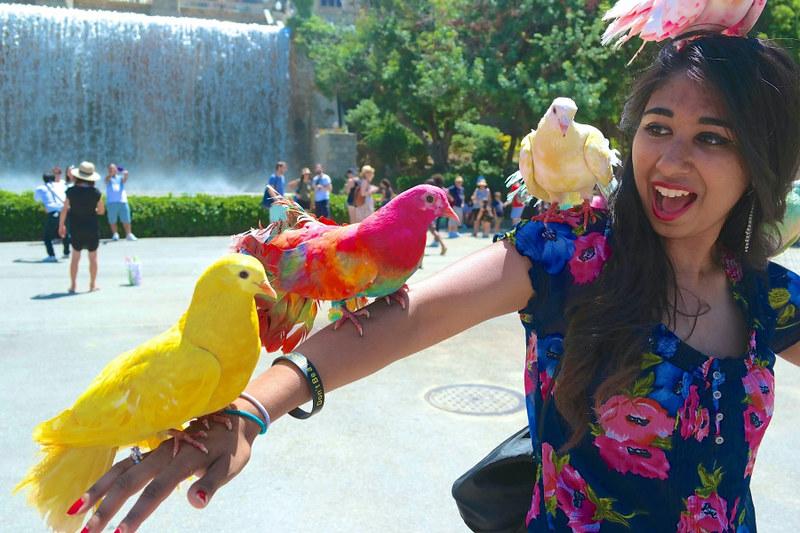 Ly, Cindy; Barcelona, Spain - NINE - Colorful Birds
