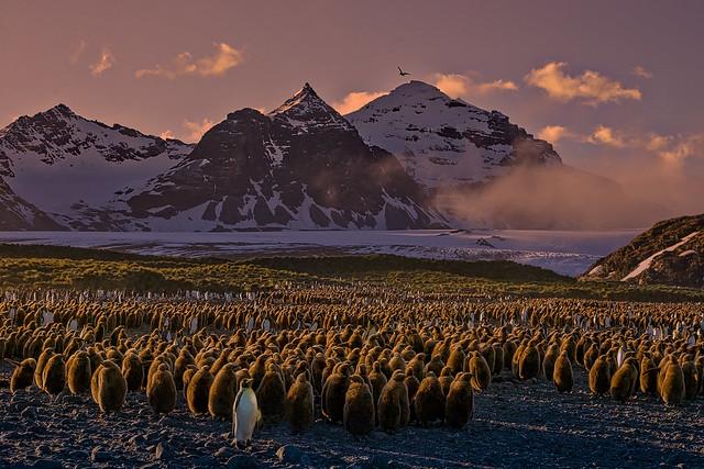 Just a few thousand penguins