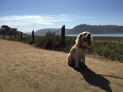 When she's smiling.... The whole world smiles with pooch. Daisy's first walk along Batiquitos Lagoon Trail. #dogstagram. Thanks @a_la_mode for the snapping this lovely photo!