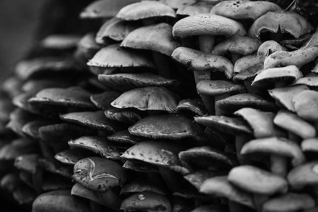 the mushroomshop