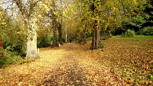 Autumn in Ipswich