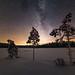 Milky Way behind little trees