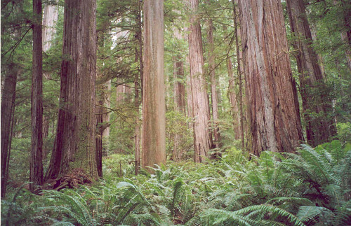 43 Jedediah Smith Redwoods State Park, CA