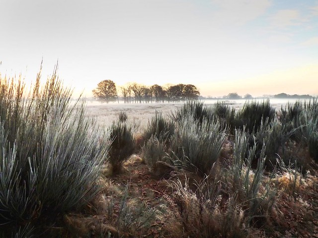 Wanstead Flats, a frosty early morning, December 2016. 006