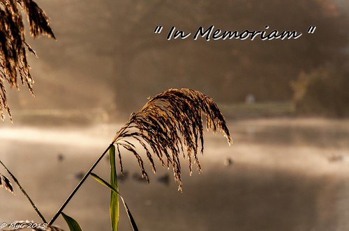 nikon nikkor18105 d90 dof dephtoffield lahulpe belgium bruxelles bokeh nature reeds myg mist brush morning sun sunrise memories paris13112015 hommage respect mygphotographiewixsitecommyg2017