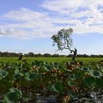 02 Viajefilos en Australia, Kakadu NP 055