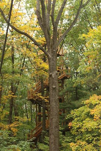 wood tower metal holdenarboretum