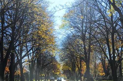 autumn newyork leaves brighton rochester suburb monroecounty treelinedstreet