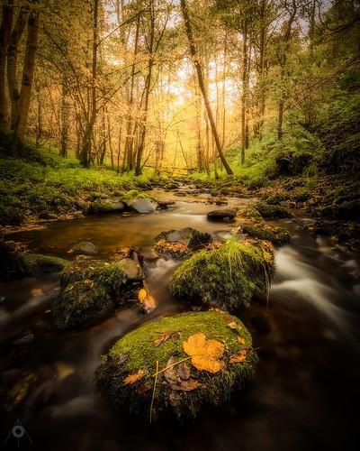 autumn bracken canon dunning fall landscape leaves leefilters longexposure nature perthshire river scotland trees water