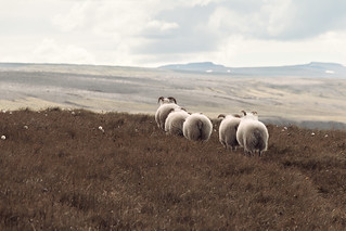 Chasing lambs | by neo :)