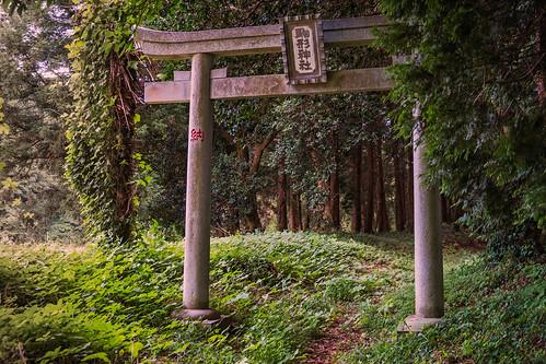 sunset japan forest shrine jp chiba shinto torii chibaken tomisato tomisatoshi fujixpro1 komakata komakatashrine