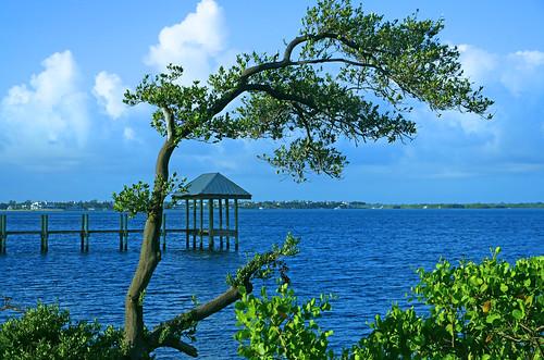 tree pier fishing florida bluesky stuart indianriver houseofrefuge hutchinsonisland