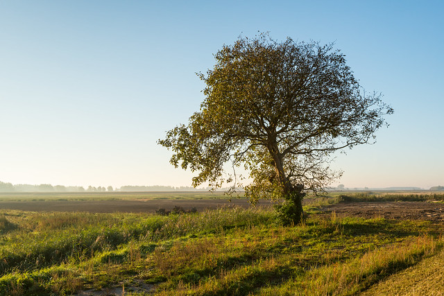Lone tree in early morning sunlight