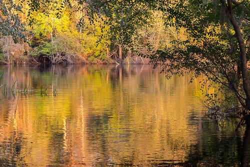 trees sc water river evening southcarolina naturallight conwaysc waccamawriver conwayriverfront lumixgh2 lumix425mm17