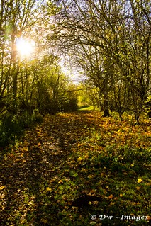 Autumm time at Barnwell country park_wm
