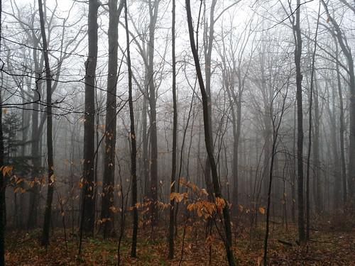 misty woods in November | by BryanAlexander